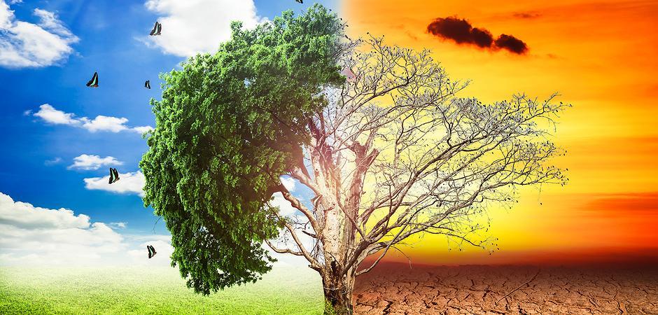 Znalezione obrazy dla zapytania klimawandel